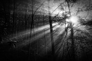 Sun Rays Photo Prints - Foggy Forest Print by Matt  Trimble