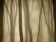 Olsson Posters - Foggy forest Poster by Rikard  Olsson
