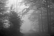 Black And White Framed Prints - Foggy Forest Framed Print by Yago Veith