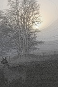 Animals Photos - Foggy Llama Sunset ll by Kathy Sampson