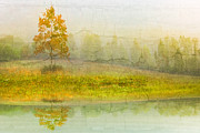Sunset Greeting Cards Prints - Foggy Meadow Print by Debra and Dave Vanderlaan