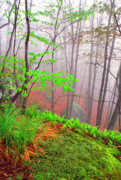 Verdant Prints - Foggy Misty Spring Morning Print by Thomas R Fletcher