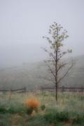 Amee Stadler - Foggy Morning