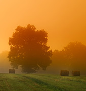 Sun Rise Prints - Foggy Morning Print by Brian Mollenkopf