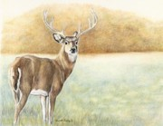 Doe Drawings Posters - Foggy Morning Buck Poster by Charlotte Yealey