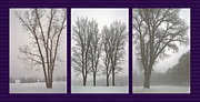 Bare Trees Mixed Media Metal Prints - Foggy Morning Landscapes Triptych Metal Print by Steve Ohlsen