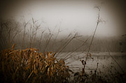 Golden Marsh Framed Prints - Foggy Morning Marsh Framed Print by Carolyn Marshall