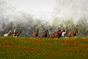 Quarter Horses Prints - Foggy Morning Print by Susan Candelario