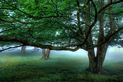 Blue Knob Photos - Foggy Morning Under the Trees at Rocky Knob II by Dan Carmichael