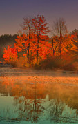 Fall Scenes Framed Prints - Foggy On Orange Framed Print by Emily Stauring