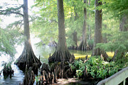 Boating Digital Art - Foggy Reelfoot Lake by Bonnie Willis