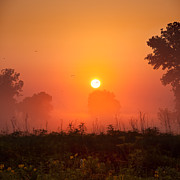 Goose Prints - Foggy Sunrise In The Prairie Print by Steve Gadomski