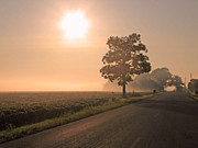Soybean Prints - Foggy Sunrise on Soybean Field Print by Jack Schultz