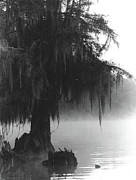 Cypress Swamps Framed Prints - Foggy Swamps Framed Print by Joy Tudor