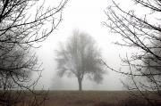Allure Photo Prints - Foggy Tree Print by Mary Van de Ven - Printscapes