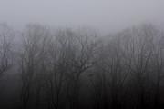 Foggy Treeline Print by Lee Dos Santos
