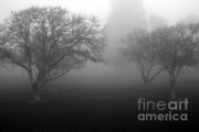Dew Covered Posters - Foggy Trees Poster by Balanced Art