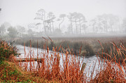 Crimson Tide Posters - Foggy Waterville Marsh Poster by Michael Thomas