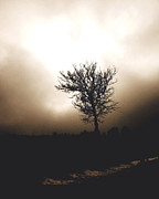 Foggy Winter Morning Print by Ann Powell
