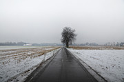 Winter Trees Photos - Foggy winter road by Mats Silvan