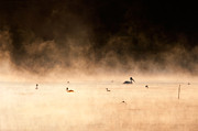 Reed Bed Prints - Fogy morning Print by Okan YILMAZ