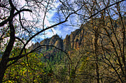 Sedona Prints - Foilage of Sedona Arizona Print by Jon Berghoff