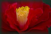 Folds Of Red Print by Jacky Parker