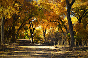 Fall Foliage Photos - Foliage Country by Andrea Hazel Ihlefeld