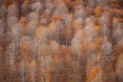 Autumn Colours Photos - Foliage by Gabriela Insuratelu
