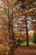 Fall Photos Prints - Foliage in the Park Print by John Rizzuto