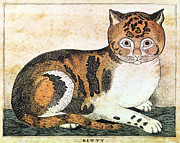 Folk Art: Cat Print by Granger