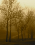 Fog Mist Prints - Follow Me Print by Jason Wolters