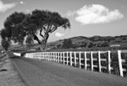 Gravel Road Framed Prints - Follow The Fence Framed Print by Patricia Stalter
