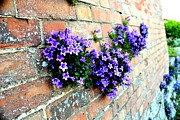 Follow The Flower Brick Wall Print by Rene Triay Photography
