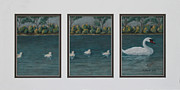 Swans... Pastels Prints - Follow the leader Print by Charles Hubbard