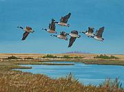 Geese Drawings Metal Prints - Follow The Leader Metal Print by Diane Ellingham