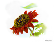 Larry Walker Prints - Follow The Sun Sunflower Print by J Larry Walker