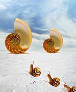 Seashell Acrylic Prints - Follow your Dreams Acrylic Print by Photodream Art