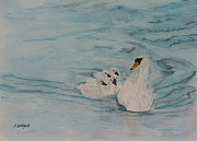 Swans... Paintings - Following Mom by Margaret Brackley