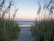 Sea Oats Digital Art Prints - Folly Beach at Sunset Print by Melanie Snipes