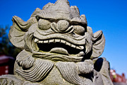 Japanese Dog Photos - Foo Dog by Extrospection Art