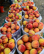 Baskets Posters - Food - Harvested Peaches Poster by Paul Ward