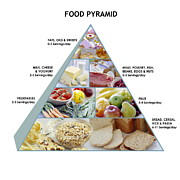 Suggestion Framed Prints - Food Pyramid Framed Print by David Munns