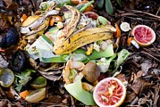 Banana Art - Food Waste On Compost Heap by Mark Williamson