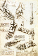 Backwards Posters - Foot Anatomy By Leonardo Da Vinci Poster by Sheila Terry
