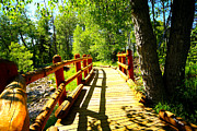 Pine Trees Art - Foot Bridge by Cheryl Young