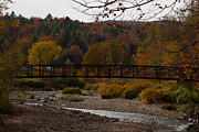 Foliage Photographs Prints - Foot Bridge Print by Robert  Torkomian