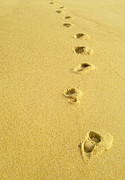 Footprints Photo Framed Prints - Foot Prints Framed Print by Carlos Caetano