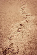 Foot Prints Posters - Foot Prints  Poster by Matt Dobson