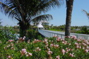 Florida Bridge Photo Originals - Footbridge by Geralyn Palmer